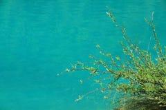 Καθαρίστε την μπλε κοιλάδα φεγγαριών νερού και δέντρων, Lijiang, Κίνα Στοκ Εικόνες