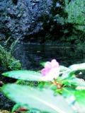 Καθαρίστε το νερό και τα λουλούδια που ανθίζουν στοκ φωτογραφία