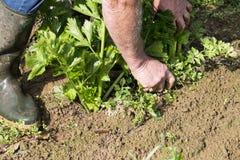 Καθαρισμός κηπουρών στον κήπο Στοκ εικόνα με δικαίωμα ελεύθερης χρήσης