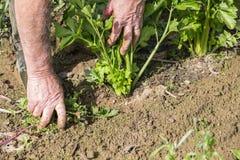 Καθαρισμός κηπουρών στον κήπο Στοκ φωτογραφία με δικαίωμα ελεύθερης χρήσης