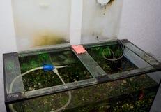 Καθαρισμός του ενυδρείου Στοκ Φωτογραφία