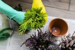 Καθαρισμός φθινοπώρου πτώσης λουλουδιών δοχείων Στοκ Εικόνες
