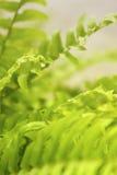 καθαρισμός φυτών αέρα Στοκ Φωτογραφίες