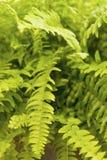καθαρισμός φυτών αέρα Στοκ φωτογραφία με δικαίωμα ελεύθερης χρήσης