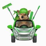 Καθαριστής σκυλιών σε ένα αυτοκίνητο ελεύθερη απεικόνιση δικαιώματος