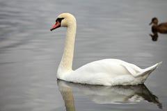 Καθαρός άσπρος άγγελος Στοκ φωτογραφία με δικαίωμα ελεύθερης χρήσης