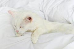Καθαρός άσπρος ύπνος γατών στοκ εικόνες με δικαίωμα ελεύθερης χρήσης