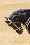 Καθαρός αγώνας αλόγων υπάκουος και υπάκουος στοκ εικόνες με δικαίωμα ελεύθερης χρήσης