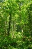 Καθαρός δασικός αέρας Στοκ φωτογραφίες με δικαίωμα ελεύθερης χρήσης