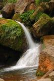 Καθαρός καταρράκτης γλυκού νερού που τρέχει πέρα από τους mossy βράχους στο δάσος Στοκ Φωτογραφία