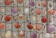 Καθαρός με τα θαλασσινά κοχύλια Στοκ εικόνα με δικαίωμα ελεύθερης χρήσης