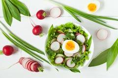 Καθαρός 6ος ώριμος ακατέργαστος σαλάτας άνοιξη τροφίμων κατανάλωσης στοκ εικόνες