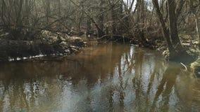 Καθαρός ποταμός την παλαιά δασική άνοιξη απόθεμα βίντεο
