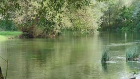 Καθαρός πράσινος ποταμός φιλμ μικρού μήκους