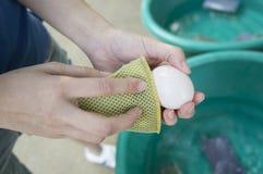 Καθαρό αυγό γυναικών Στοκ Εικόνες
