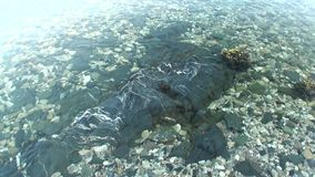 Καθαρό σαφές νερό της θάλασσας της Kara στην αγριότητα της αρκτικής ωκεάνιας νέας γης Vaigach φιλμ μικρού μήκους