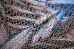 Καθαρό σύνολο των ψαριών Στοκ φωτογραφία με δικαίωμα ελεύθερης χρήσης
