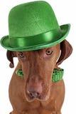Σκυλί με το πράσινο καπέλο Στοκ Φωτογραφίες