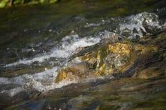 καθαρό ύδωρ ρευμάτων έννοιας φρέσκο Στοκ εικόνα με δικαίωμα ελεύθερης χρήσης