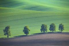 Καθαρό naturar υπόβαθρο στα πράσινα χρώματα Στοκ Εικόνες