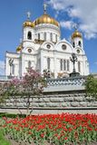 Καθεδρικός ναός Χριστού το Savior που πλαισιώνεται από τα λουλούδια την άνοιξη στοκ εικόνα με δικαίωμα ελεύθερης χρήσης