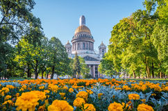 Καθεδρικός ναός του ST Isaac ` s στην Άγιος-Πετρούπολη, λουλούδια στο πρώτο πλάνο Στοκ Εικόνα