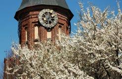 καθεδρικός ναός kaliningrad Στοκ φωτογραφίες με δικαίωμα ελεύθερης χρήσης
