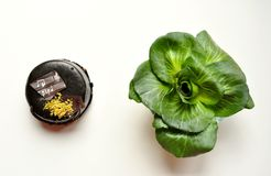 Καθημερινές επιλογές τροφίμων: υγιής εναντίον ανθυγειινός Στοκ εικόνα με δικαίωμα ελεύθερης χρήσης