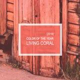 Καθιερώνον τη μόδα χρώμα του έτους 2019 Κοράλλι διαβίωσης στοκ φωτογραφίες