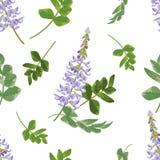 Καθιερώνον τη μόδα floral σχέδιο των ιωδών λουλουδιών Galega και των πράσινων φύλλων Ο ελεύθερη απεικόνιση δικαιώματος