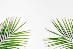 Καθιερώνον τη μόδα σχέδιο με το πράσινο σχέδιο χορταριών στην άσπρη χλεύη άποψης υποβάθρου τοπ επάνω Στοκ Φωτογραφία