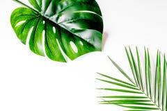 Καθιερώνον τη μόδα σχέδιο με το πράσινο σχέδιο χορταριών στην άσπρη χλεύη άποψης υποβάθρου τοπ επάνω Στοκ Εικόνες