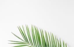 Καθιερώνον τη μόδα σχέδιο με το πράσινο σχέδιο χορταριών στην άσπρη χλεύη άποψης υποβάθρου τοπ επάνω Στοκ φωτογραφία με δικαίωμα ελεύθερης χρήσης