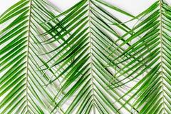 Καθιερώνον τη μόδα σχέδιο με το πράσινο σχέδιο χορταριών στην άσπρη τοπ άποψη υποβάθρου Στοκ φωτογραφία με δικαίωμα ελεύθερης χρήσης