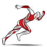 Καθιερώνουσα τη μόδα τυποποιημένη μετακίνηση απεικόνισης, τρέχοντας άτομο, διανυσματική σκιαγραφία γραμμών απεικόνιση αποθεμάτων