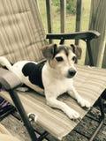 Καθμένος ανθρώπινο σκυλί Στοκ φωτογραφία με δικαίωμα ελεύθερης χρήσης