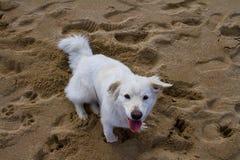 Καθμένος αστείο σκυλί Στοκ Εικόνα