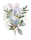 καθολικός Ιστός προτύπων σελίδων ίριδων χαιρετισμού λουλουδιών καρτών ανασκόπησης η ανασκόπηση απομόνωσε το λευκό στοκ φωτογραφίες