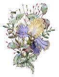καθολικός Ιστός προτύπων σελίδων ίριδων χαιρετισμού λουλουδιών καρτών ανασκόπησης η ανασκόπηση απομόνωσε το λευκό στοκ φωτογραφία με δικαίωμα ελεύθερης χρήσης