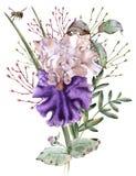 καθολικός Ιστός προτύπων σελίδων ίριδων χαιρετισμού λουλουδιών καρτών ανασκόπησης η ανασκόπηση απομόνωσε το λευκό στοκ φωτογραφίες με δικαίωμα ελεύθερης χρήσης