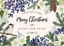καθολικός Ιστός προτύπων σελίδων χαιρετισμού Χριστουγέννων καρτών πουλιών ανασκόπησης στοκ φωτογραφία με δικαίωμα ελεύθερης χρήσης