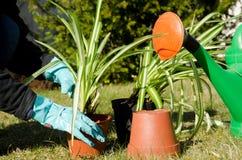 καθορίζοντας τα λουλούδια πράσινα Στοκ εικόνες με δικαίωμα ελεύθερης χρήσης