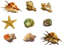 καθορισμένα αναμνηστικά θάλασσας στοκ εικόνες