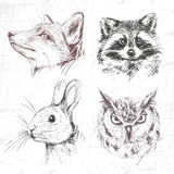 Καθορισμένα δασικά ζώα διανυσματική απεικόνιση