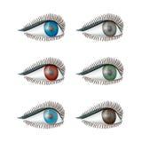 Καθορισμένα θηλυκά μάτια σε ένα άσπρο υπόβαθρο Στοκ Φωτογραφίες