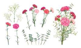 Καθορισμένα λουλούδια γαρίφαλων διανυσματική απεικόνιση