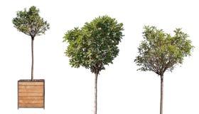 Καθορισμένα μικρά πράσινα δέντρα που απομονώνονται στο άσπρο υπόβαθρο Στοκ φωτογραφίες με δικαίωμα ελεύθερης χρήσης