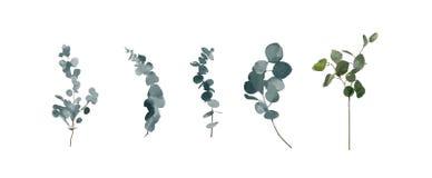 Καθορισμένα στοιχεία watercolor - χορτάρια, φύλλο, λουλούδια κήπος συλλογής ελεύθερη απεικόνιση δικαιώματος