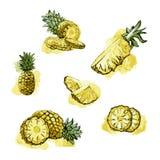 Καθορισμένα φρέσκα φρούτα ανανά Στοκ φωτογραφίες με δικαίωμα ελεύθερης χρήσης