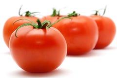 καθορισμένες ντομάτες Στοκ φωτογραφία με δικαίωμα ελεύθερης χρήσης